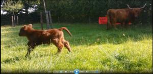 screenshot film kalfje
